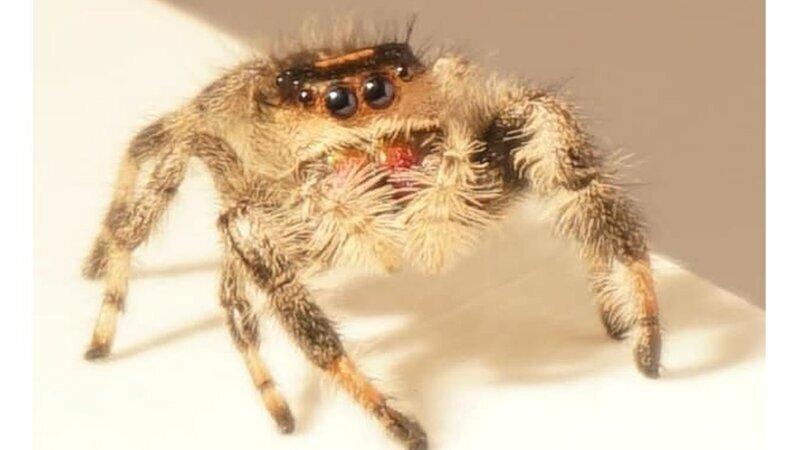 Самцы некоторых пауков перекачивают сперму в кончик лапки, который вставляют самке и отрывают его, тем самым создавая пробку - чтобы и сперма не вытекла, и другой не влез