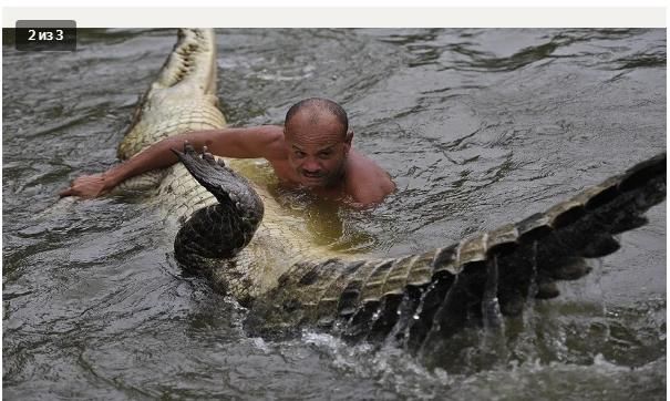 Два десятилетия крокодильей дружбы