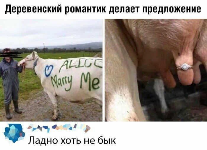 А с коровой не так странно, что-ли?