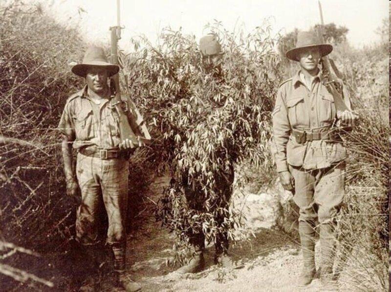 Австралийские бойцы и пленный турецкий снайпер, замаскированный под куст конопли. 1916г.