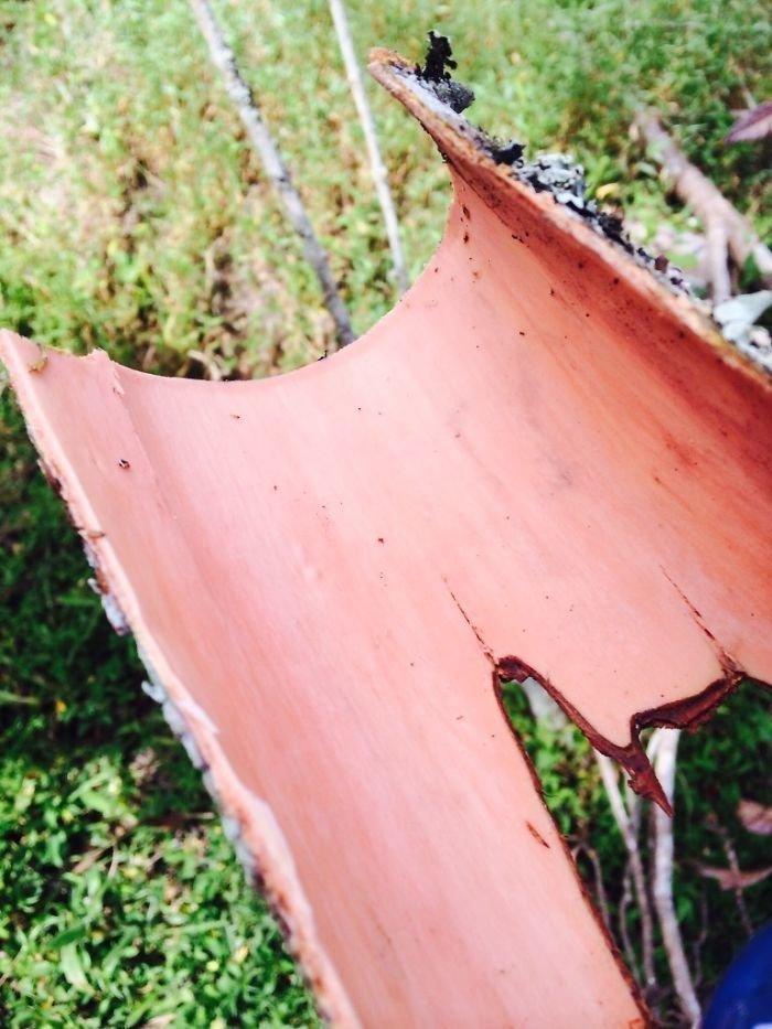 Свежая корица - прямо с дерева