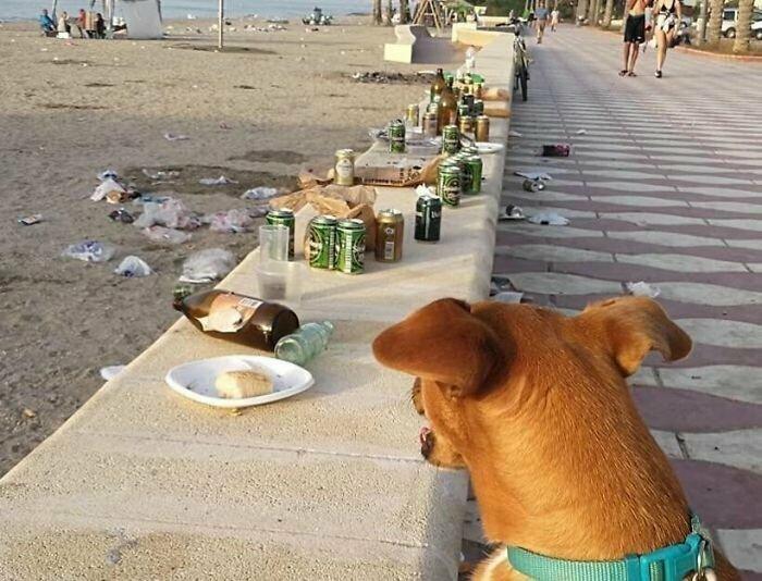 3. Собак не пускают на пляж из-за того, что они могут устроить беспорядок