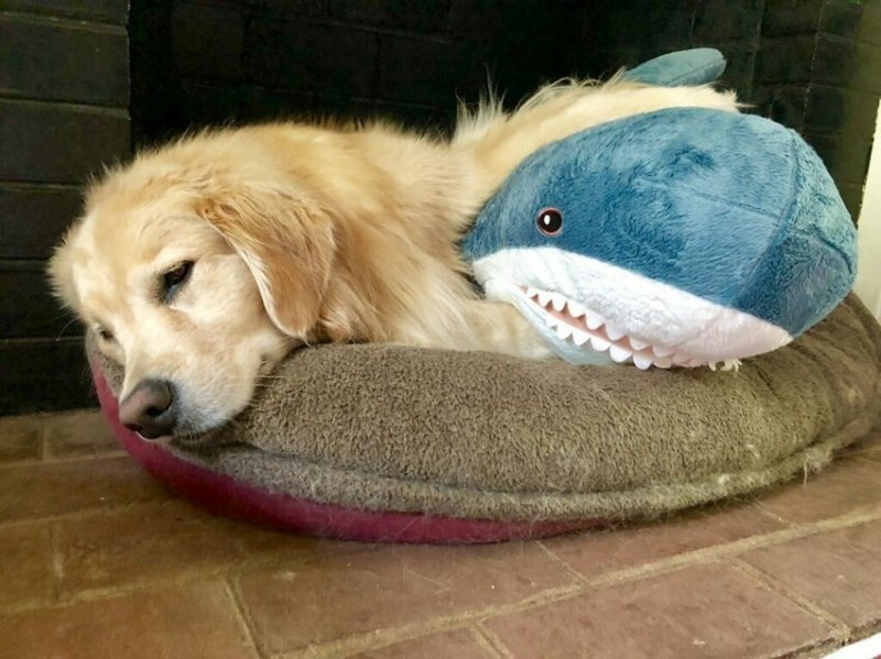 1. Венкман и акула Блохэй