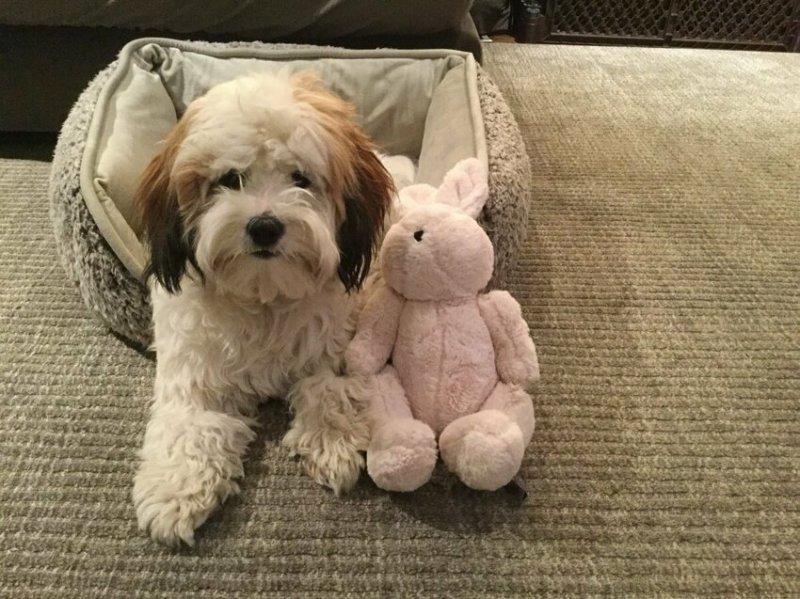 12. Мэйпл и кролик