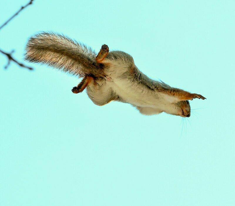 Та самая летяга?