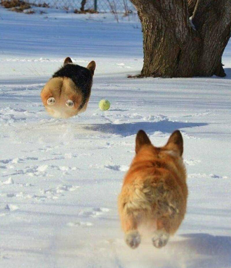 Летающие собакены