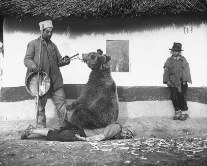 3. Цыган «лечит» спину при помощи медведя