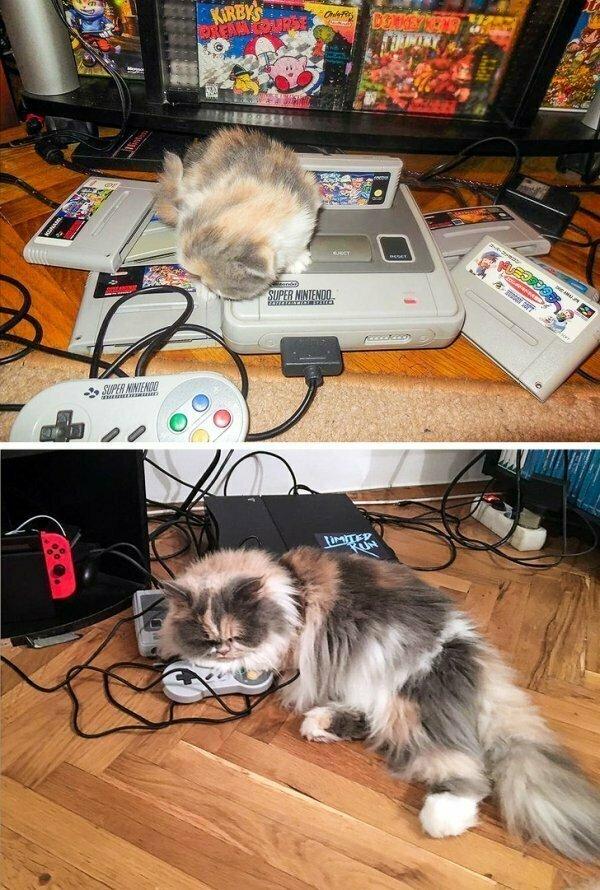 Эта кошечка буквально выросла на играх Super Nintendo.