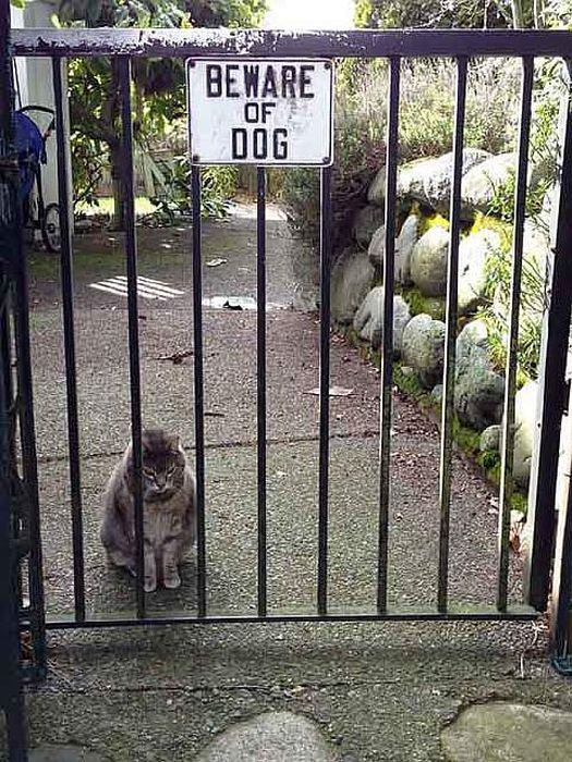 Коты могут быть злыми, как собаки