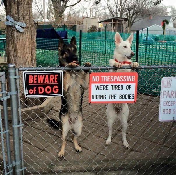 Осторожно, очень-очень злые собаки!