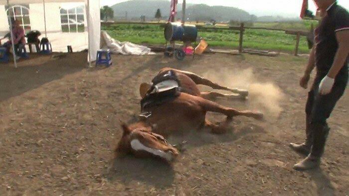 Лошади - трудолюбивые и выносливые создания