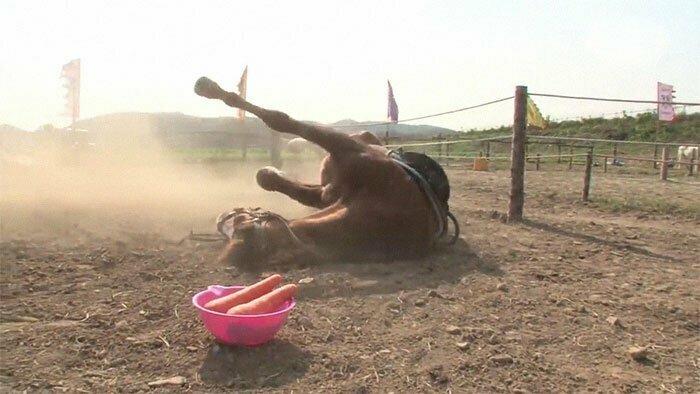 Строптивый жеребец прикидывается мертвым, чтобы отлынивать от работы