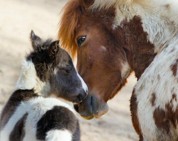 30 кадров животных, которые нежно и трогательно любят