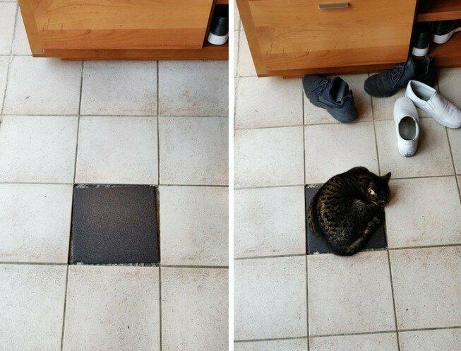 Котики латают черные дыры в окружающем нас пространстве
