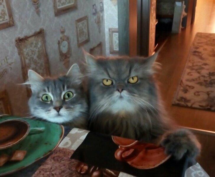 Кошки в совершенстве владеют гипнозом. Иначе как еще объяснить их умение подчинять нас своей воле, чтобы мы безропотно выполняли все их капризы