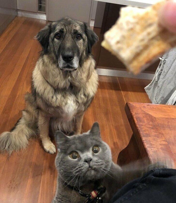 Пока одни терпеливо ждут, когда судьба проявит благосклонность, кошки просто идут и берут свое