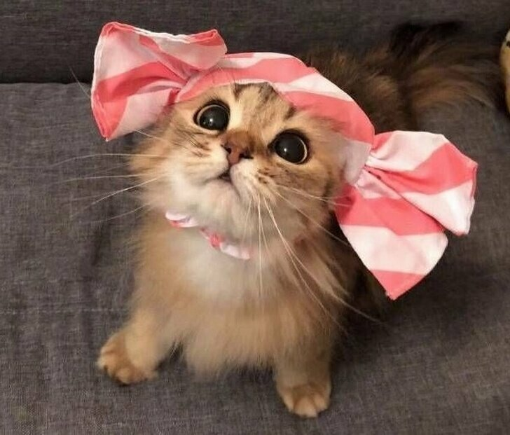 Ни одно существо на земле не умеет так мастерски строить глаза кота из «Шрека»