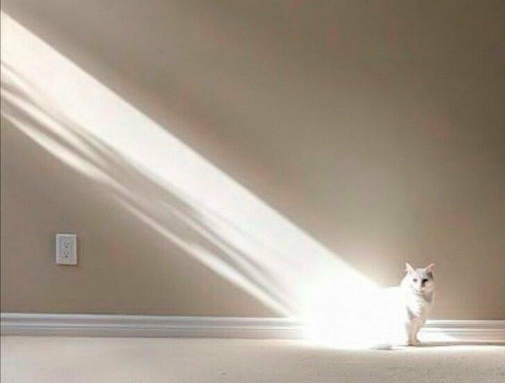 Вот, впервые зафиксированный наукой момент прибытия кошки на поверхность Земли