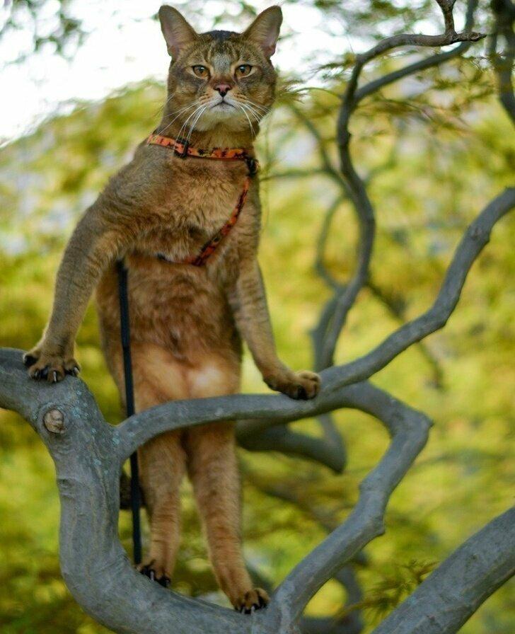 Кошки — прирожденные фотомодели: это факт, не требующий доказательств