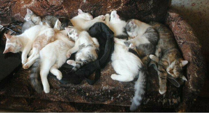Только помните: кошки имеют свойство накапливаться