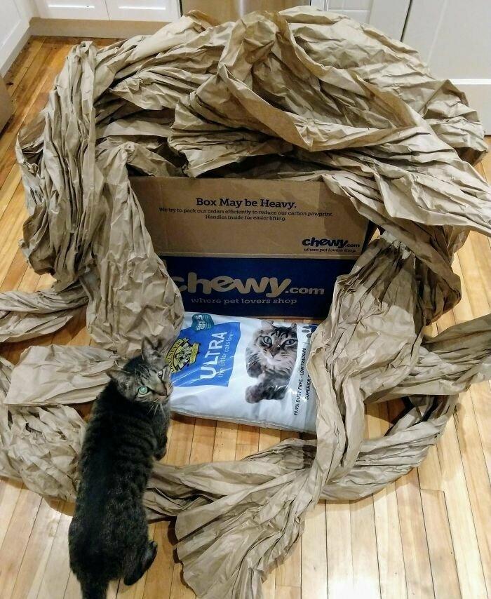 """""""И вся эта бумага - для одного пакета наполнителя для кошачьих туалетов! Ее бы коту явно хватило на более долгое время!"""""""