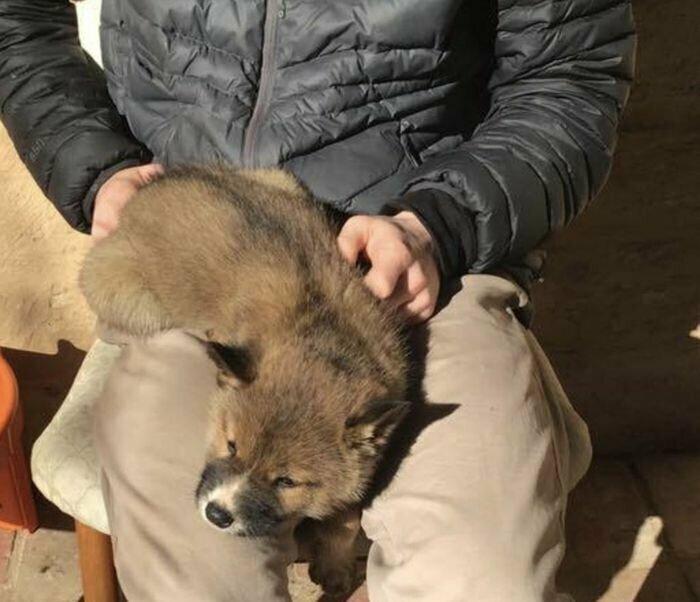 Австралийка подобрала бездомного щеночка