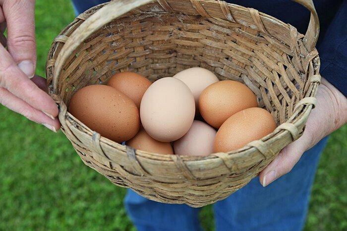 5. Цвет яиц кур-несушек обычно зависит от цвета их ушных мочек
