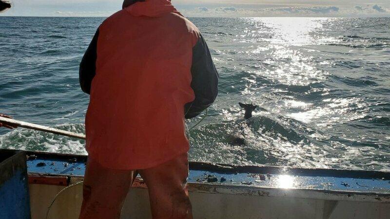 Счастливое спасение: рыбаки выловили в открытом море оленя