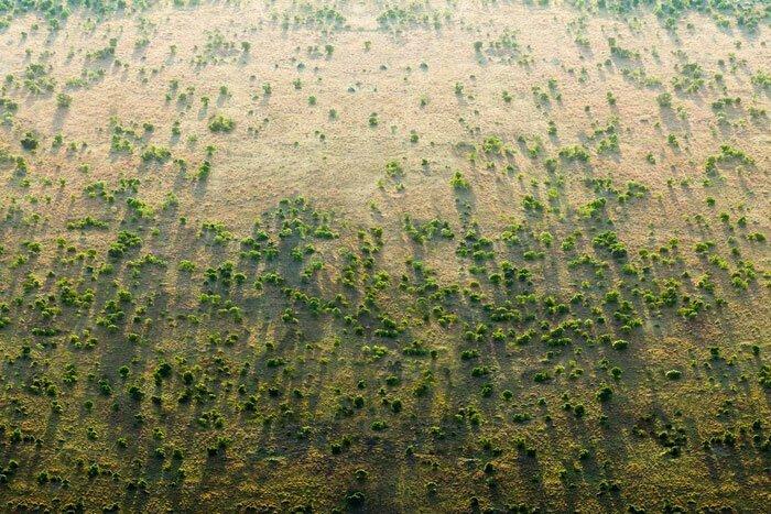 Африку решили опоясать Великой зеленой стеной
