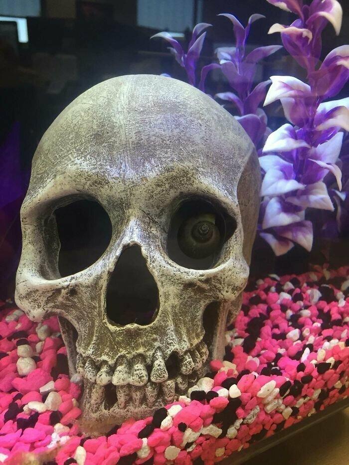 """""""Улитка в нашем офисном аквариуме сегодня страшно меня напугала"""""""