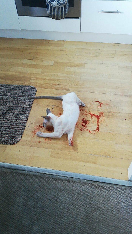 """""""Кот сегодня утром меня напугал до чертиков. Это сухая паприка"""""""