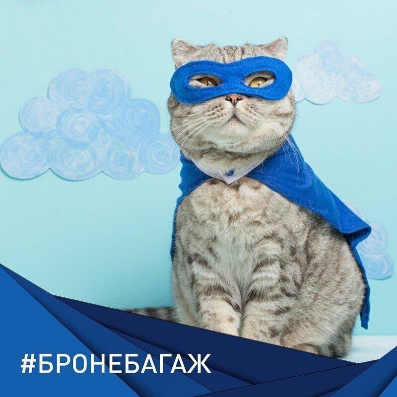 """За упитанного кота """"Аэрофлот"""" чуть совсем не затроллили"""