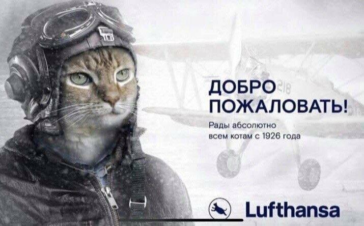 """Жирный кот """"Аэрофлота"""" попал даже в рекламу немецкой авиакомпании"""