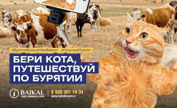 Одно из них не только не имеет ничего против котов, а даже призывает брать их с собой в дорогу.