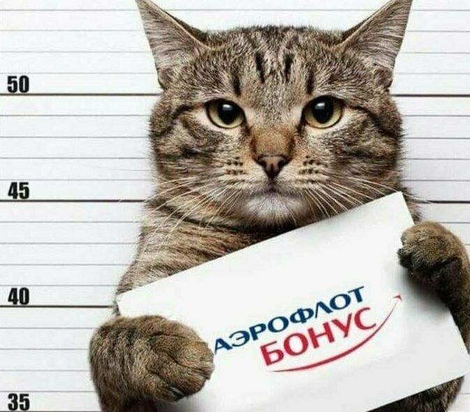 17. И вернуть хозяину кота все бонусы
