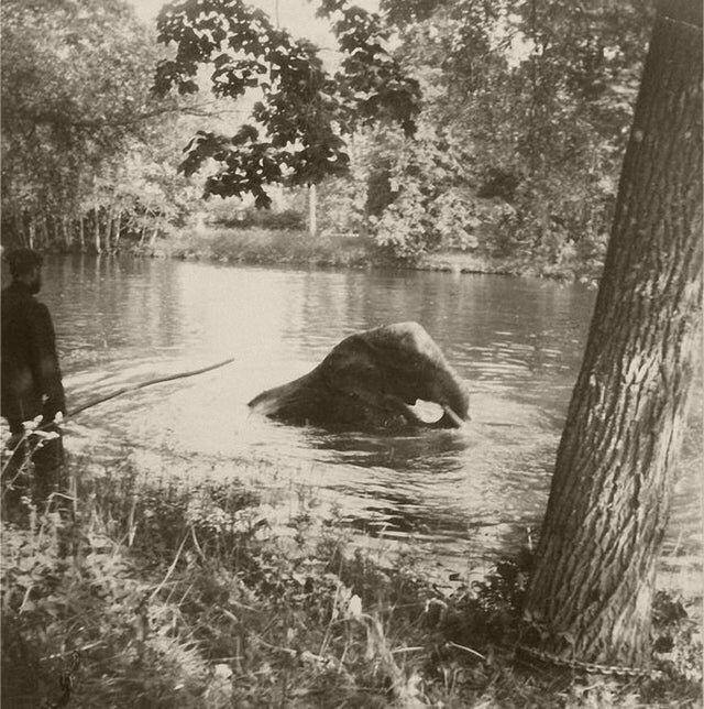 15. Николай II наблюдает за тем, как слон купается в пруду, Царское село, 1910 год