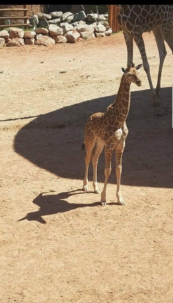 Когда ты жирафик, а в душе единорог