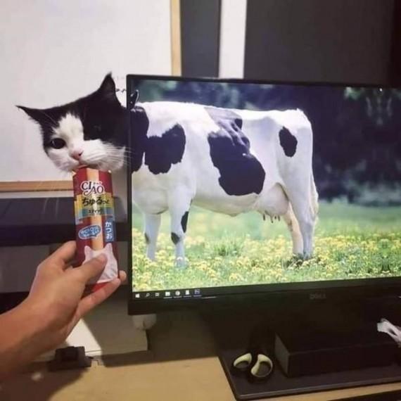 Ну как не подурачиться с котом?
