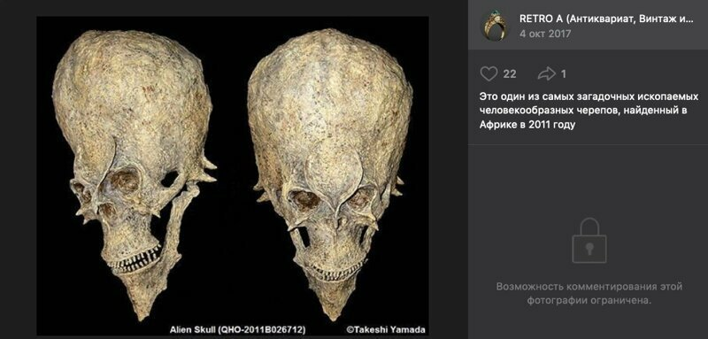 Этот череп создал скульптор-таксидермист Такэси Ямада в наши дни
