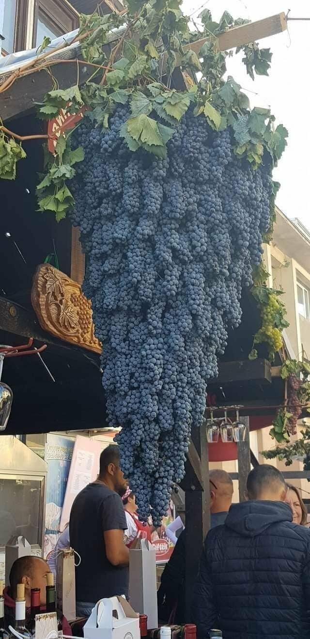 12. Грозди винограда, вывешенные в виде одной большой грозди винограда