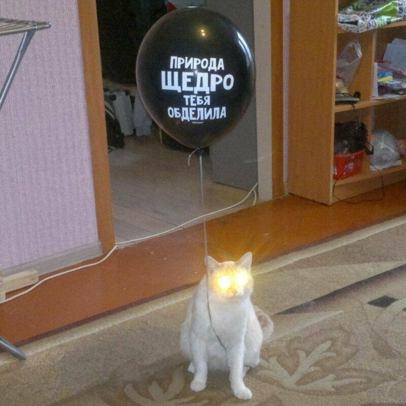 Вся суть кошек