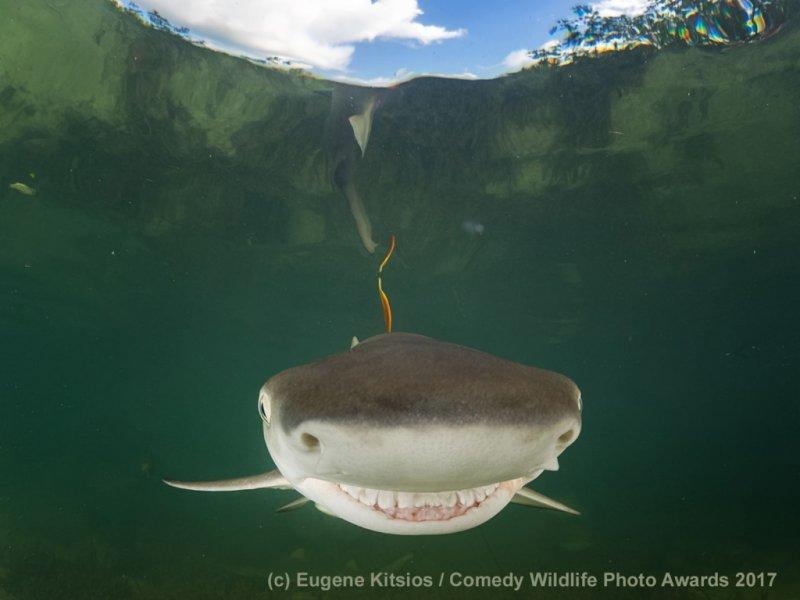 Рыба-улыба