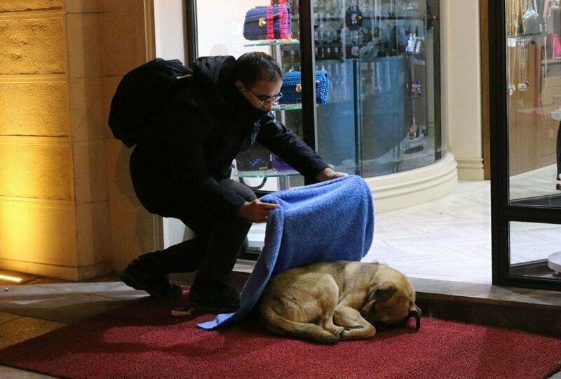 3. Турецкий стоматолог Хусейн Юртсевен укрывает бродячих собак пледами и спасает от холода