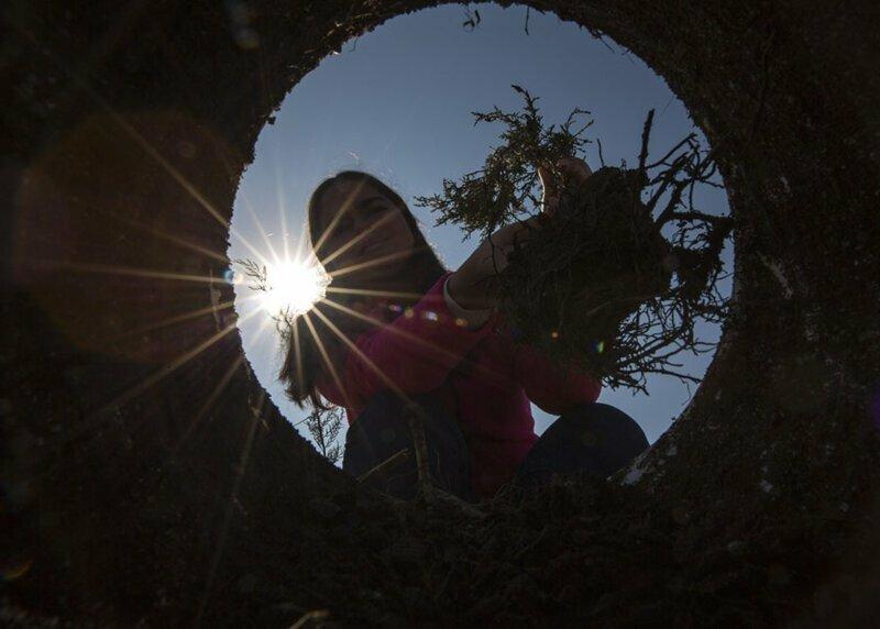 25. Девушка сажает дерево в рамках акции — в Турции 11 миллионов деревьев были посажены одновременно