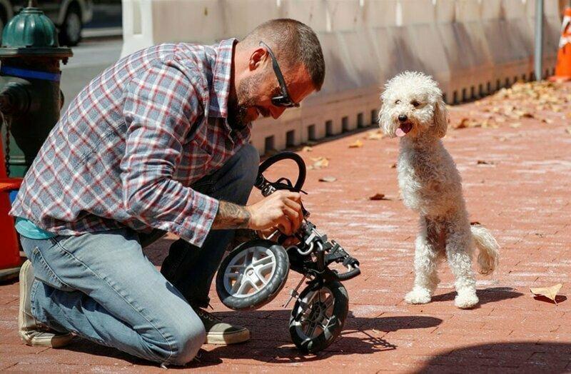 27. Собака ждёт, пока починят её коляску