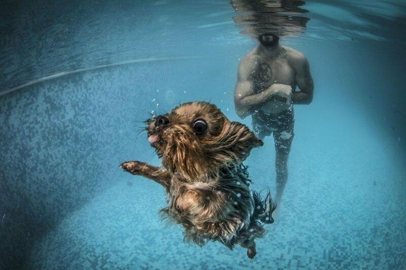 22. Собака плавает во время водной терапии в Стамбуле, Турция