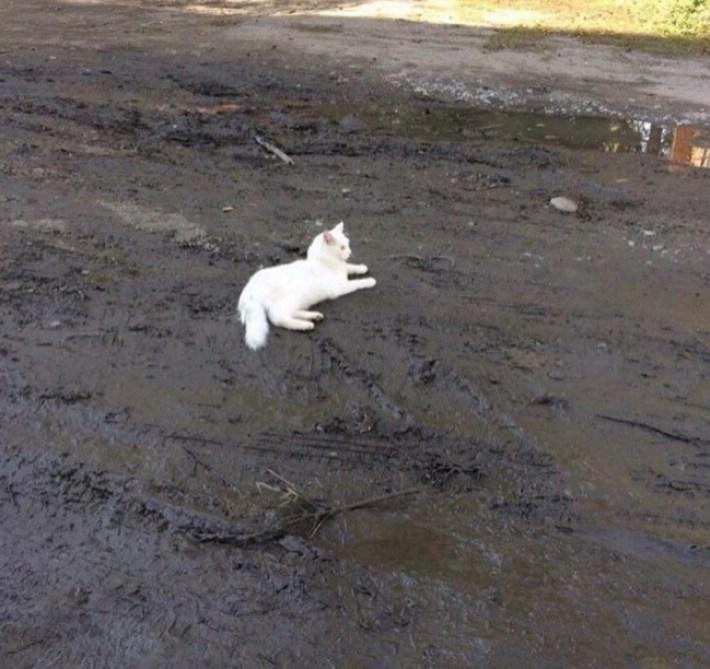 Хорошо тебе, котик?