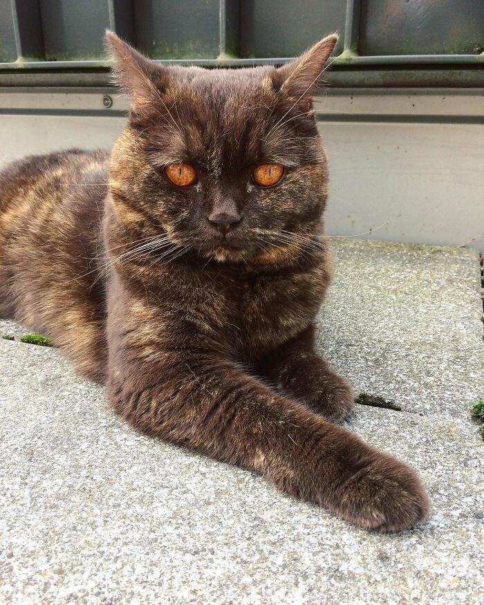 Кот с глазами Саурона