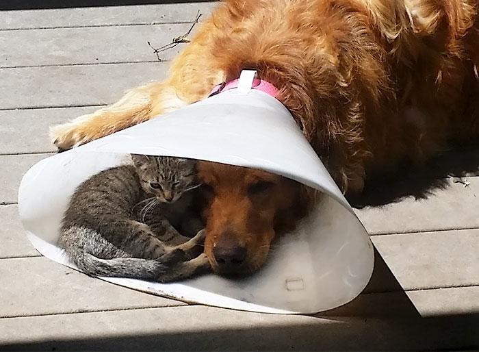 Они нашли друг друга