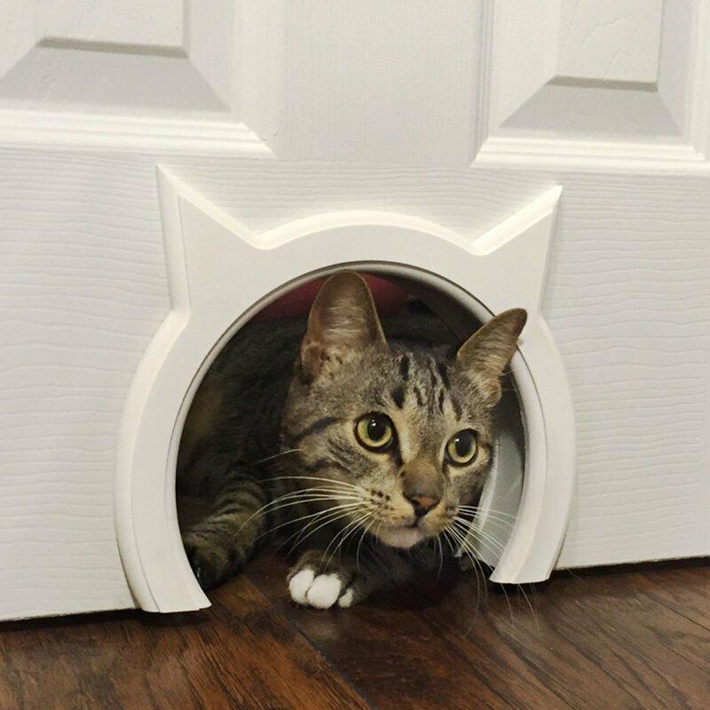 Удивительные отверстия для котов